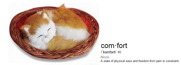 cat_comfort